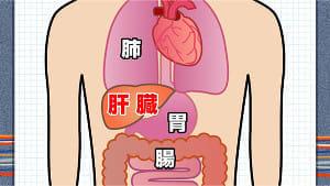 肝臓病に立ち向かう<上>脂肪肝で食い止めよ