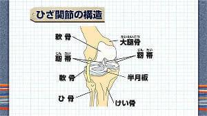 膝痛、腰痛特集<上>放置すると寝たきりにつながる可能性