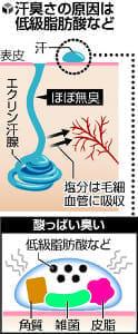 汗の臭い防ぐには?…臭さの原因、雑菌の分解作用
