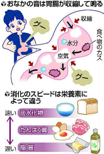 空腹時…おなか鳴る理由 : yomiDr. / ヨミドクター(読売新聞)