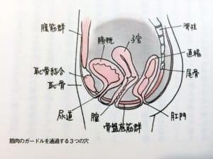 よくある骨盤底筋群の説明図(『女医が教えるこれでいいのだ! 妊娠・出産』より)
