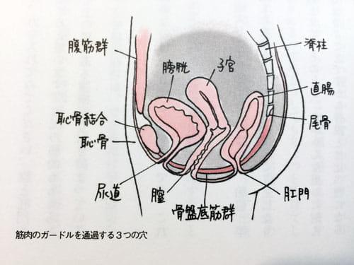骨盤底筋群(『女医が教えるこれでいいのだ! 妊娠・出産』より)