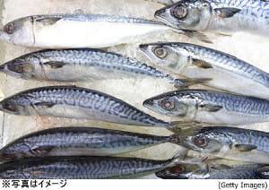魚を食べると頭がよくなる、その訳とは