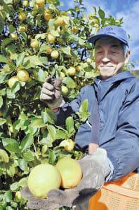 レモン、加工品も人気…広島県尾道市