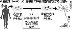遺伝性パーキンソン病患者のiPS、「ゲノム編集」で正常な神経細胞に修復