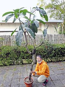健康植物(3)マンゴー種子肥満予防に