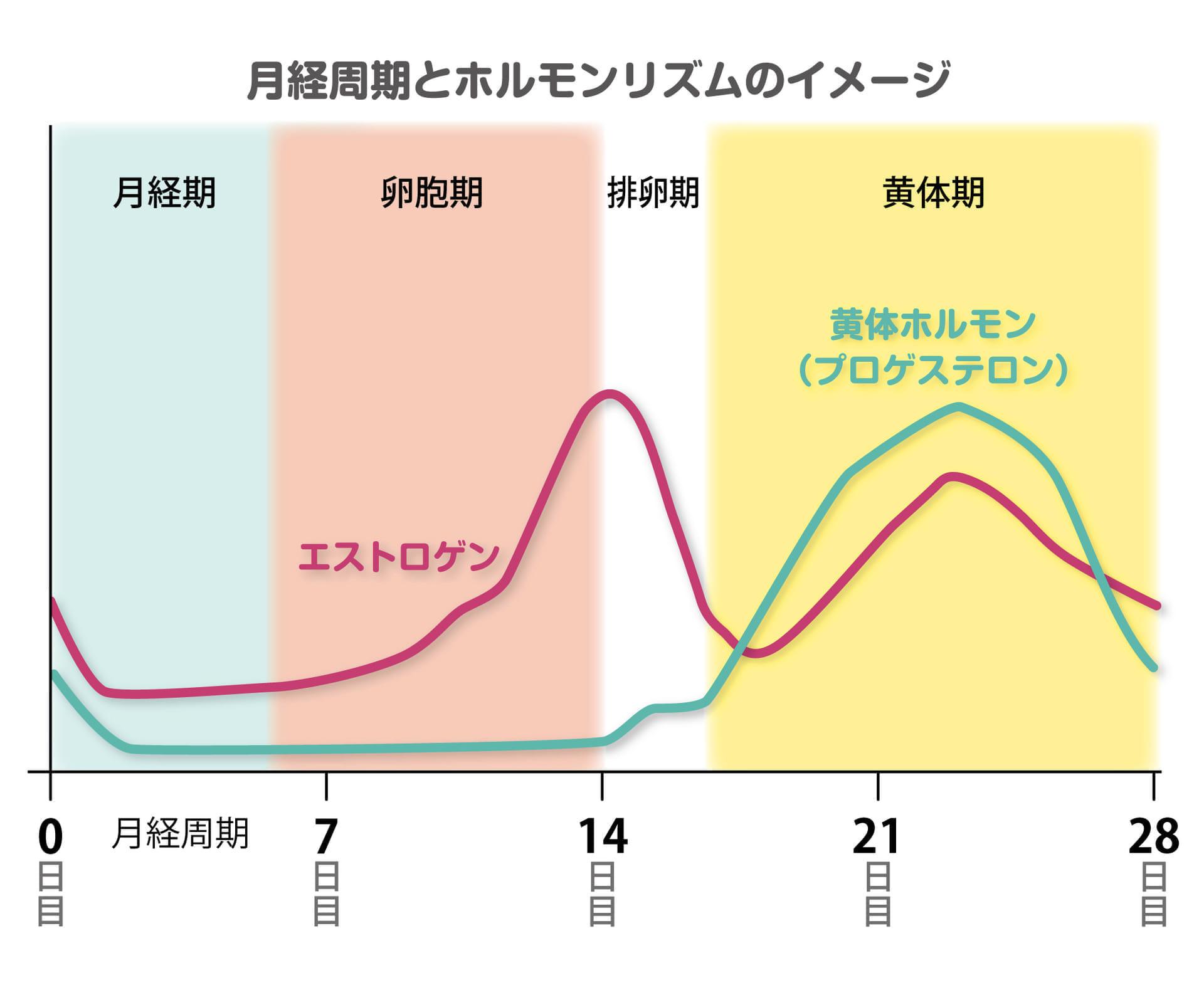 替えkounenki-ホルモンリズム-