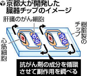 体内再現した「臓器チップ」、京大チーム開発…抗がん剤副作用も確認可能
