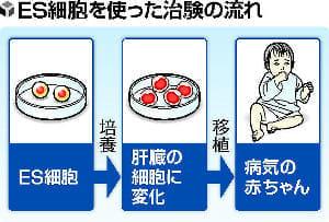 ES細胞、国内初の治験…肝疾患の乳児に移植へ