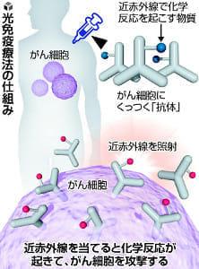 光当て「がん治療」治験、3月にも開始…「近赤外線で化学反応」利用