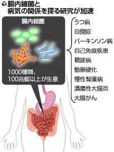 100兆個の「腸内細菌」、健康に影響…慢性腎臓病や大腸がんにも