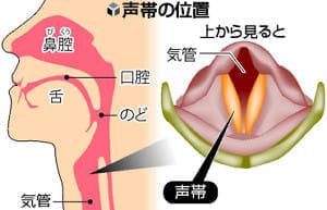 [声帯を丈夫に](1)乾燥が大敵 大声も負担