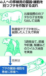 臓器移植用ブタを作製、来年初めに供給開始予定…明大・京都府大などチーム