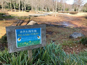 ホタルも息づく緑地を発見