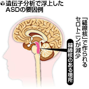 発達障害「自閉スペクトラム症」解明進む…セロトニン減少、発症に関与か