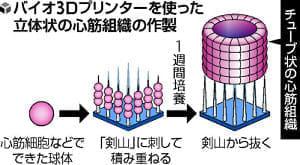 3Dプリンターで心筋組織…慶大などのグループ