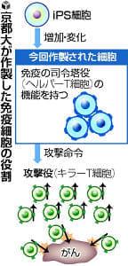iPSから免疫細胞、がん治療に応用へ…京大研究所