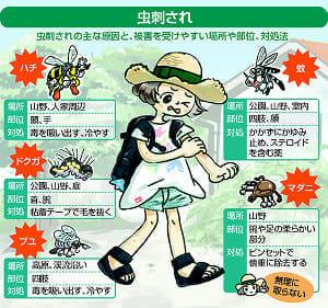 虫刺されの季節、蚊以外の害虫にも注意…異なる対処、正しい知識を