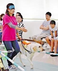 支える犬たち(下)盲導犬デビューは4割