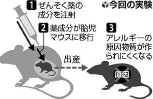胎内でアレルギー予防、母へ薬投与すると子に効果…マウス実験で成功