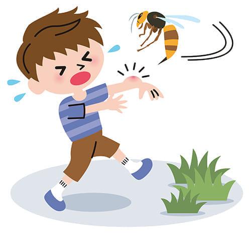 夏は虫刺され患者急増 怖いアナフィラキシーショック