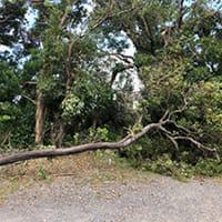停電、倒木どこ吹く風 お年寄りの暮らしに学ぶ…千葉・台風被害から1か月 内科クリニックの奮闘記