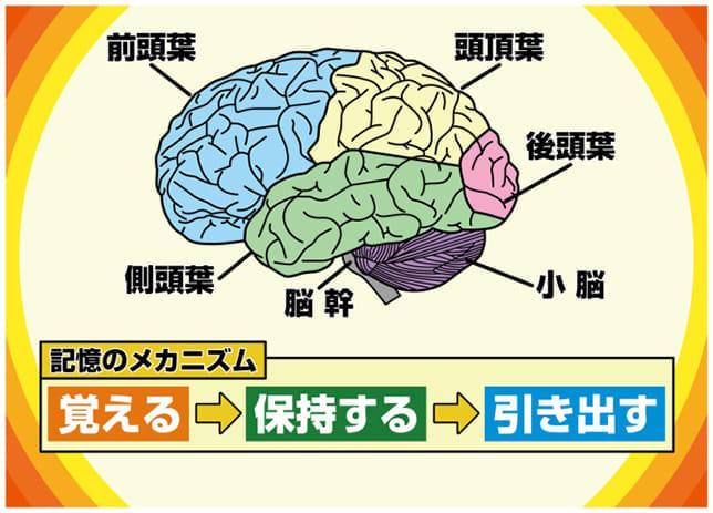 「ちょい忘れ」は認知症の始まり? その原因、深刻度、改善策