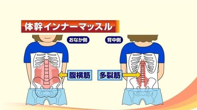 骨盤の底にある筋肉とつながる「腹横筋」…どう動かす?