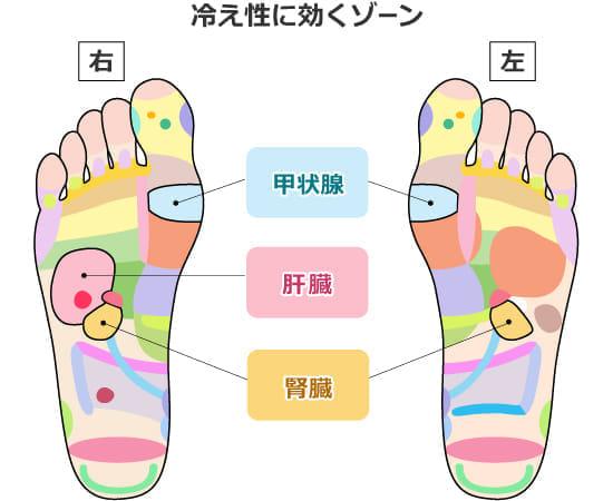 「冷え性」血行を良くする「腎臓・肝臓・甲状腺」ゾーン