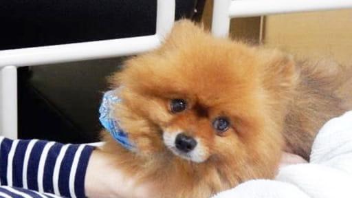 [余命3か月の入居](4) 愛犬と駆け抜けた10か月の「老春」 念願通り、チロに看取られ