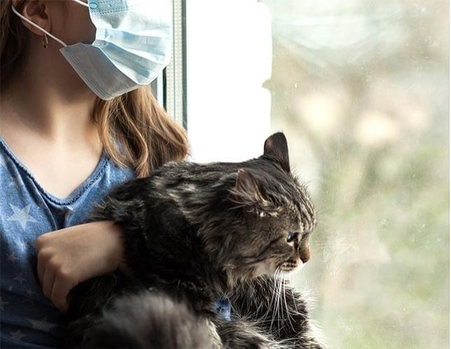「みんな、自宅待機して」…免疫抑制剤を飲み、感染リスク抱える移植患者の願い