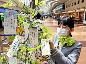 「早く収束して楽しい旅ができますように」…羽田空港、お願い事は代筆で笹飾り