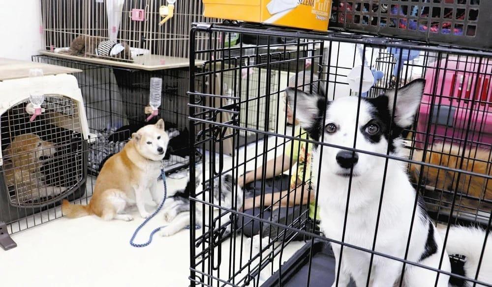 保護された犬たち(藤沢市のレスキュードアニマルネットワークで)