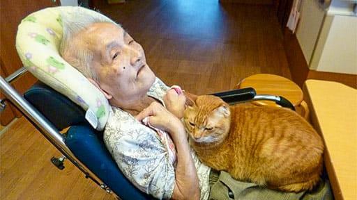 なぜ「ペットと暮らせる特養」なのか 動物愛護活動?