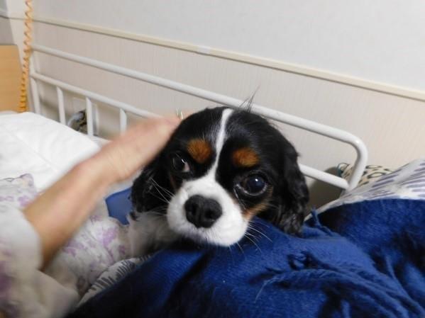 神経難病と闘う(1) 70代女性「犬を飼ったら共倒れ」 わかっていたが我慢できず…