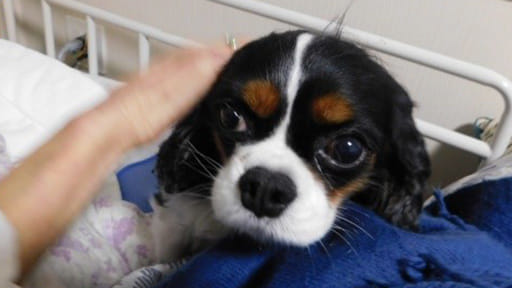 神経難病と闘う① 70代女性「犬を飼ったら共倒れ」 わかっていたが我慢できず…