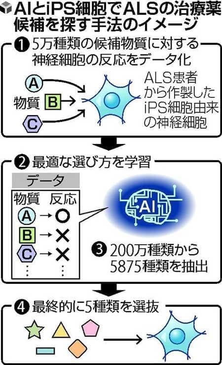 AI×iPS=新薬候補…京大などが開発