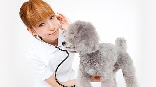 """世界初、イヌのがんに対する免疫療法 抗PD""""ワン""""抗体を開発"""
