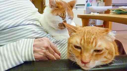 癒やし猫(中)「トラは私の弟なの」重度認知症の女性 猫と暮らして穏やかに