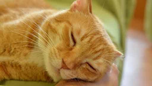 癒やし猫(下)入居者に寄り添い続けたトラ 最期は入居者と職員に抱きしめられて天国へ