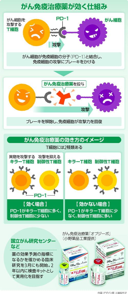 「がん免疫治療薬」…適切な投与へ 効果予測