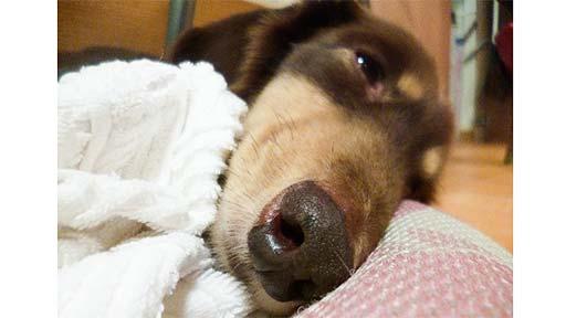 残された犬(下)ホームの飼い犬になり、入居者を癒やし、天寿をまっとう