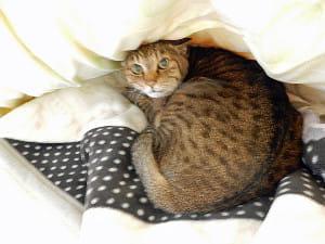 2匹の愛猫を看取った入居者(上)…「ナッキー」が起こした奇跡