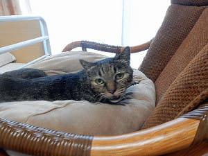 2匹の愛猫を看取った入居者(下)…先代が導いた奇跡 「ナッキー2世」登場