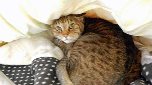 2匹の愛猫を看取った入居者(上)「ナッキー」が起こした奇跡