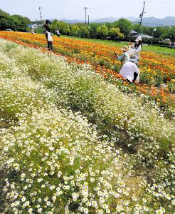 鮮やかなコントラスト、白とオレンジの花が競演