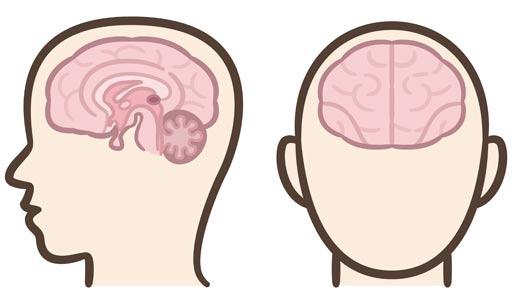 """眼球運動を司る「脳幹」の構造は重要…村上""""ポンタ""""秀一さん「視床出血」も"""