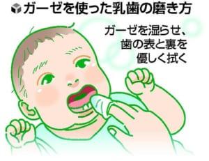 口の中の健康(3)卒乳の遅れ むし歯に注意