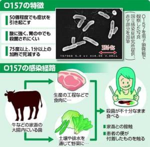 O157による感染症…加熱で殺菌 徹底し防ぐ