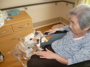 認知症の女性を癒やした犬(上)…奇跡の嵐を呼ぶ犬「アラシ」との出会い